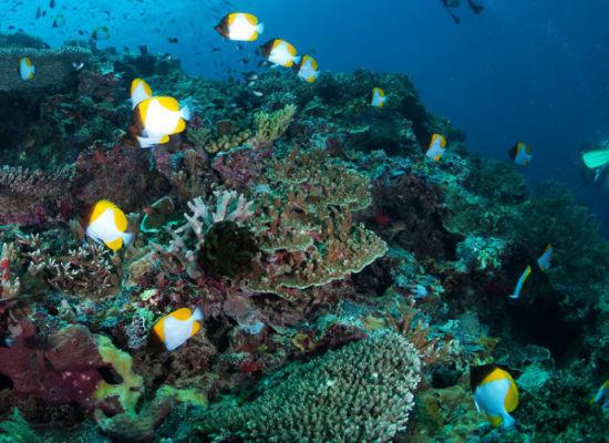 珊瑚和小鱼