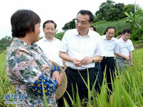 7月9日,李克强考察冲陶村的稻田。