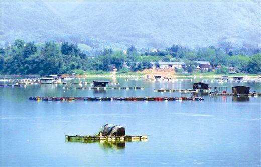 青狮潭水库水面上星罗棋布的网箱。
