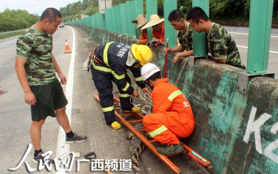 消防官兵拿长梯子压住鳄鱼再进行抓捕