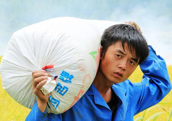 8月3日,在融安县潭头乡岭背村北山屯,一名群众在田间搬运刚收获的稻谷。(谭凯兴/摄)