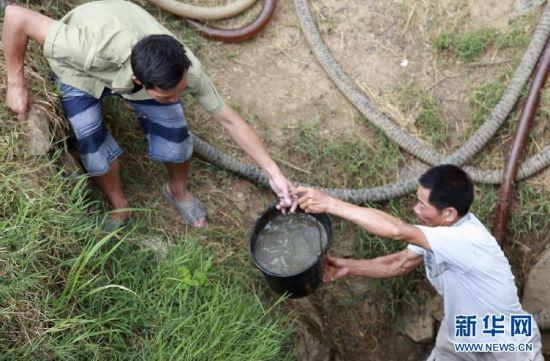全州县东山瑶族乡坪香村的村民在提水准备灌溉禾苗。