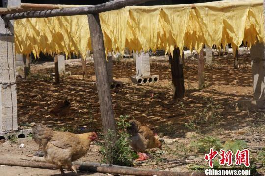 广西男子覃某在农家院内开设腐竹小作坊