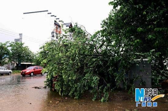 一辆汽车从被大风刮倒的大树旁驶过。
