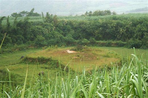 新安村外农田中的一座汉墓。南国早报 王剑 摄