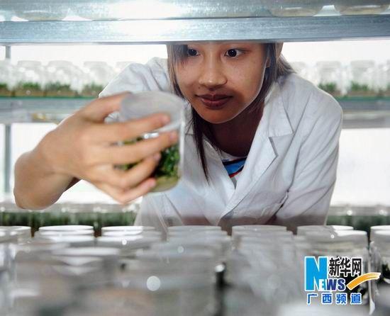广西大学生山村办种植场创业