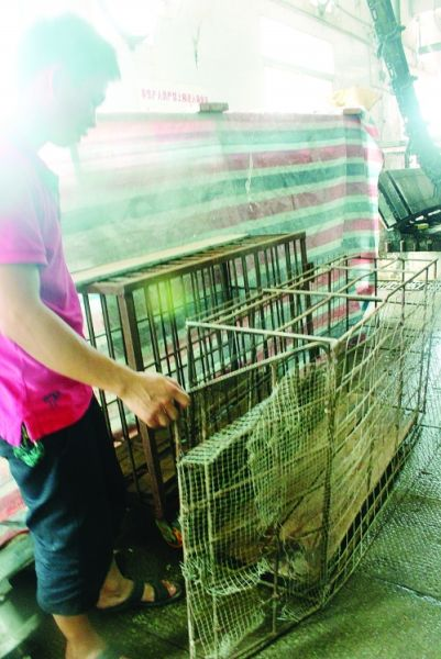 野猪就是从这个笼子里逃脱的。