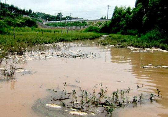 出现死鱼的鱼塘就在施工工地下游。南国早报记者赵劲松 摄