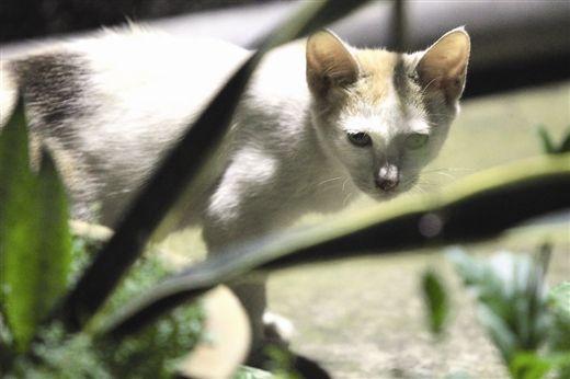 文化厅大院内,一只瘦弱的小猫在草丛中路过。南国早报记者邹财麟 图