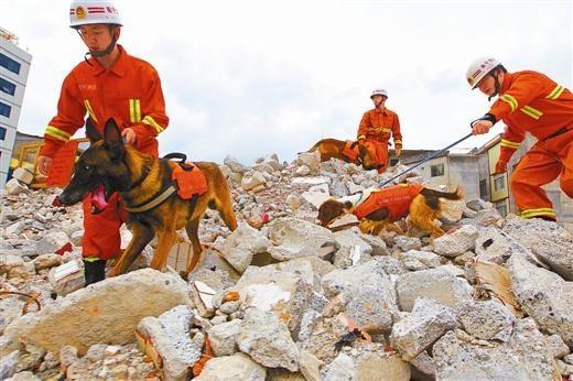 广西消防搜救犬队日常训练。广西消防网 图