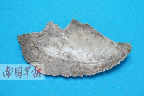 宝剑山洞穴遗址出土的锯齿刃蚌器。