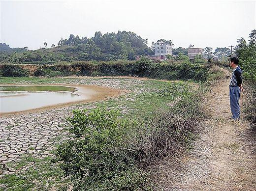 看着已经快放空水的鱼塘,周伯理对家庭农场下一步的发展有些拿不准。记者 王春楠 摄