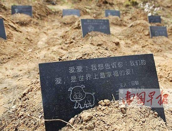 """国内一些城市已在尝试建立""""宠物公墓""""。资料图片"""