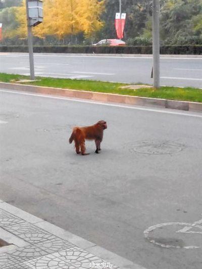 """猴子在人行道上非常""""淡定""""。 网友 米宝儿 摄"""