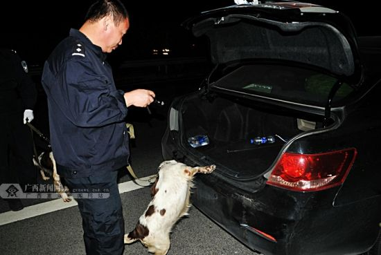 警方使用缉毒犬开展查缉毒品。广西新闻网通讯员 吴长鹰 摄