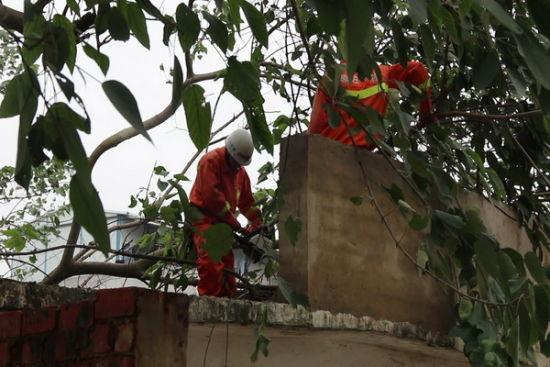消防官兵在解救病人之后,对病房附近的枝干进行处理。