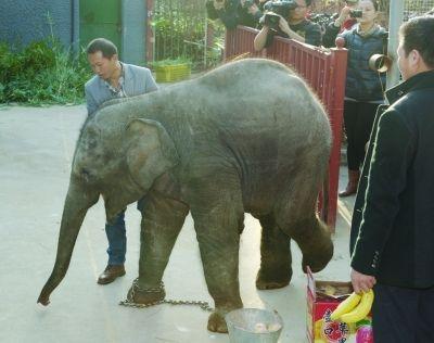 来自南宁的小象。 范晓林 摄