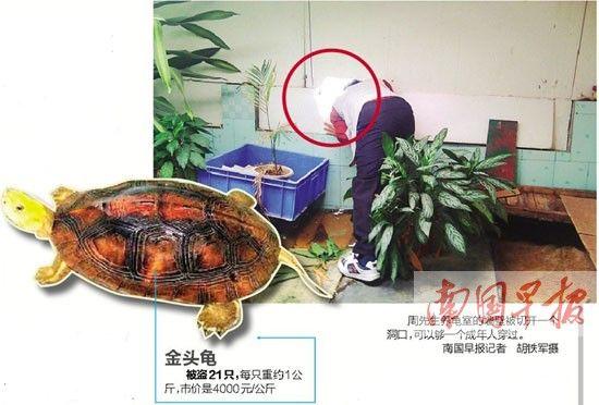 养龟户价值百万元种龟被盗疑熟人作案(图)