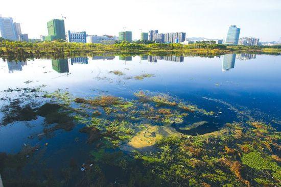 黑镜子一般的明月湖倒映着四周的建筑,水面上还漂有一些水葫芦。南国早报记者 邹财麟 摄