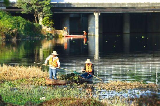 明月湖黑幽幽的水面上,打捞工人们乘船将水葫芦打捞起来。南国早报记者 邹财麟 摄
