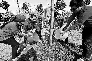中越青年在广西南宁市体育中心共植友谊林。