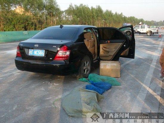 高速交警拦截卖野生蜥蜴的车辆。图片来源:广西新闻网