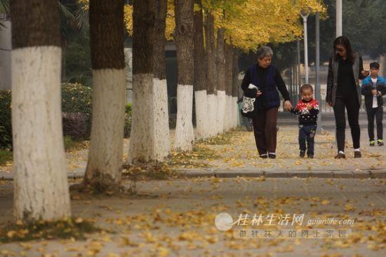一些社区里,没有被清扫的落叶成为了一道风景