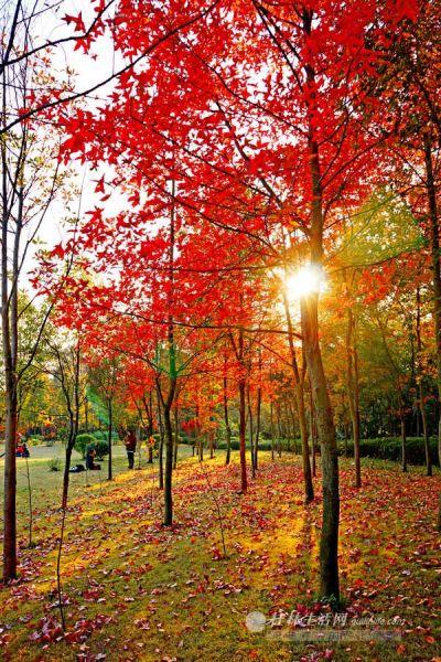 七星公园里的落叶美景