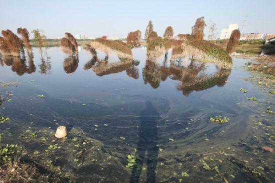 明月湖内黝黑的湖水,一些生长在水中的树木枯萎了。南国早报记者 邹财麟 摄