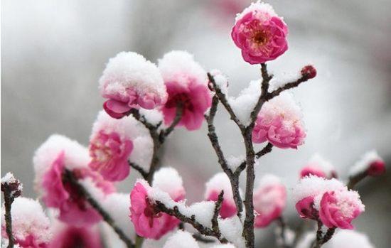 冬季赏雪的注意事项