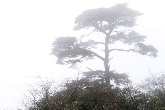冬游猫儿山看云雾缭绕观原始森林