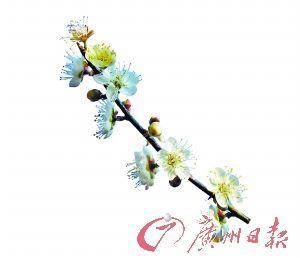 信步乡间广东周边闻香寻梅