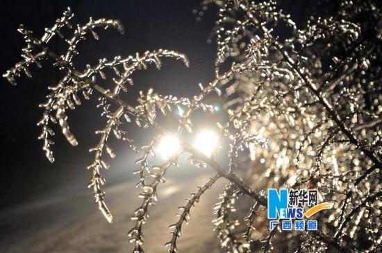 这是2月9日拍摄的广西桂林市全州县东山瑶族乡公路边结冰的树枝。
