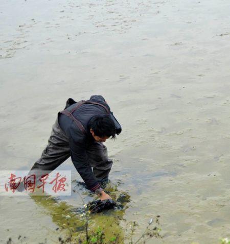潘旺远正在清点鱼塘中的死鱼。