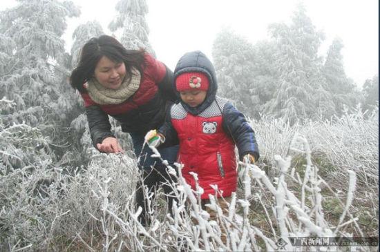 """大容山景区出现了""""千树万树梨花开""""的壮观的冰挂雾凇景观"""