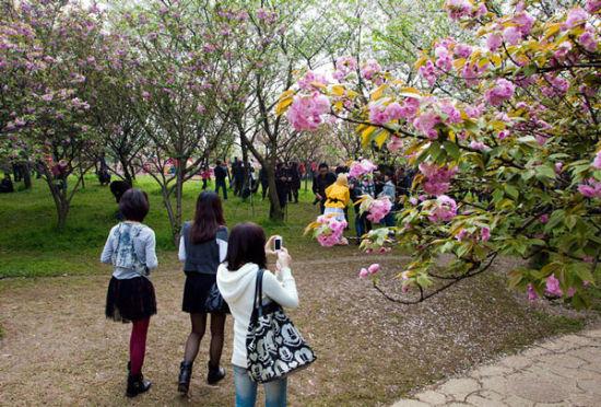周末花开 桂林市民在赏花