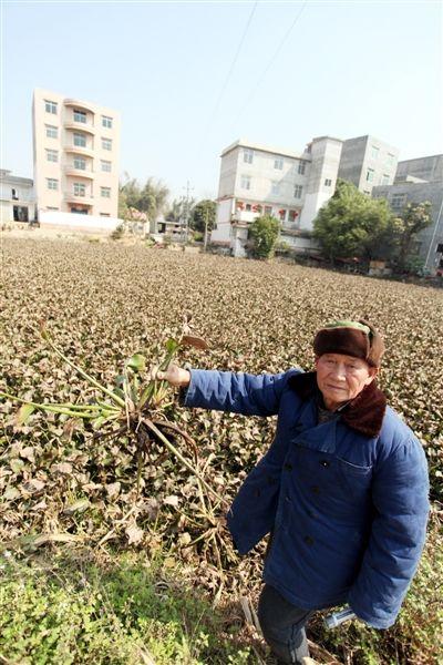"""吴圩镇定力坡被水葫芦""""包围""""了。"""