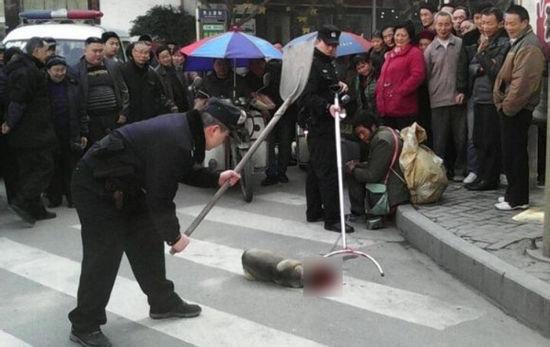 有警察当街将一只流浪狗打死。对此阆中市西城派出所回应称是按照规定捕杀。