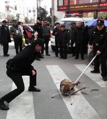 民警从车上拿出一根钢叉,对着那只流浪狗猛敲。