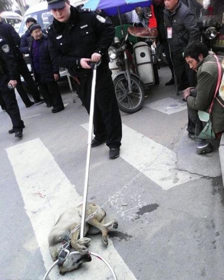 捕杀流浪狗现场。
