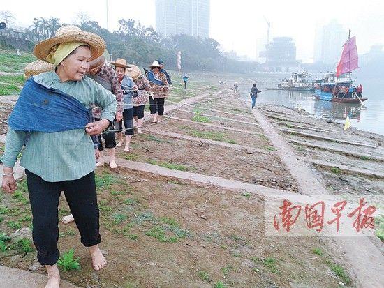 妇女们在江边赤脚拉渔船。 记者 蒋银花 摄