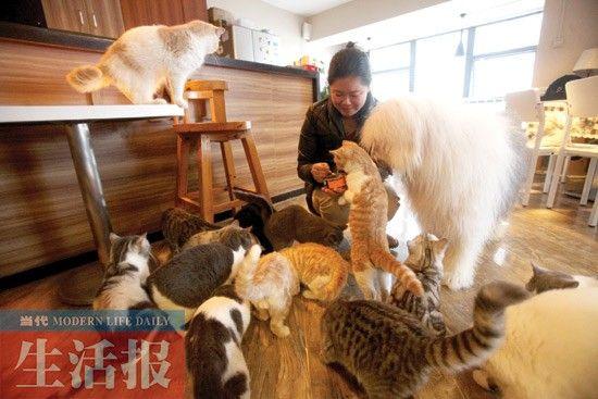 亚当与猫一起生活、吃猫食。