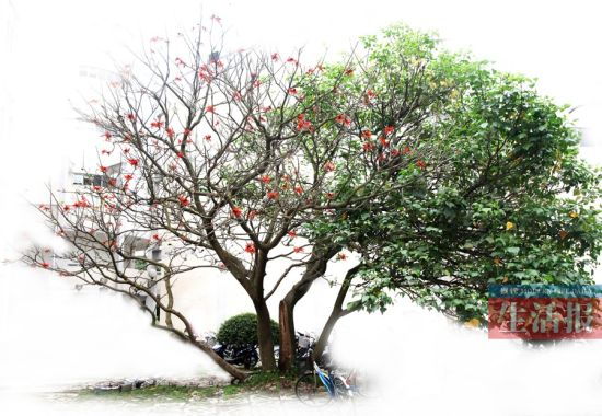 一边满是红花 一边满是绿叶。