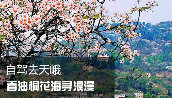 赏花季自驾去天峨 漫漫花田里遇见春天