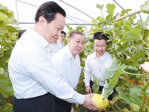 图为彭清华在万象市的中-老合作农作物优良品种试验站考察。记者 刘宇 摄