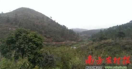 越南走私猪,2年前是通过这里步行来中国。农财宝典记者 高勇红 摄