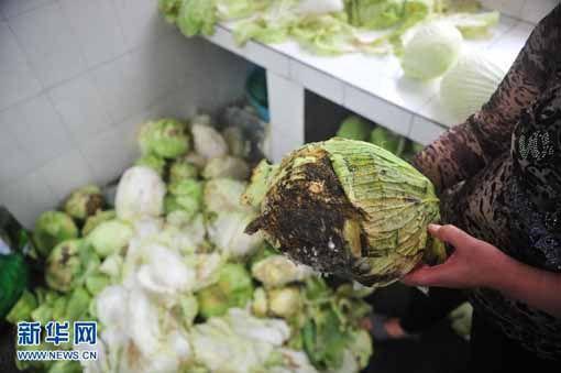 梅珠小学食堂工作人员展示已经出现腐烂的卷心菜。新华社记者 黄孝邦 摄
