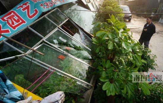 在昨日凌晨的狂风暴雨中,金东花卉市场内一门面棚体整体倒塌。记者 卿要林 摄