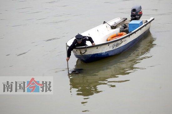 民警在壶东大桥下游打捞溺水者。记者 张存立 摄