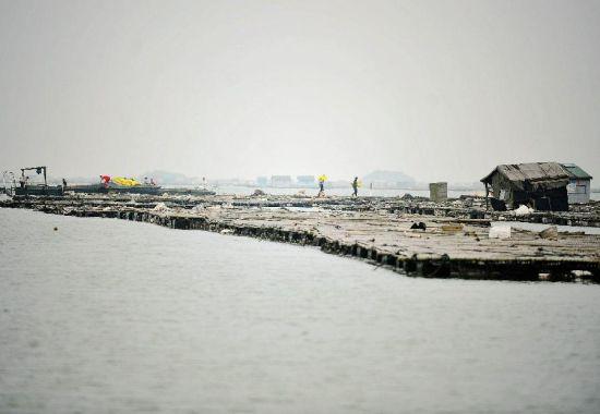 4月12日,钦州市钦南区农民在向近海深水扎筏上运送蚝苗,发展吊养。新华社记者 张爱林 摄